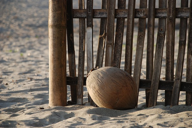 Plod kokosu